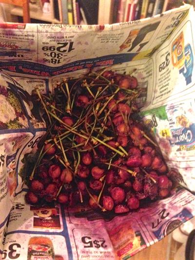 Cherry Dumpling 3